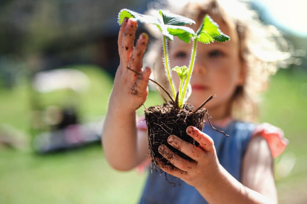 Small girl with dirty hands holding strawberry plant outdoors in garden, sustainable lifestyle concept.